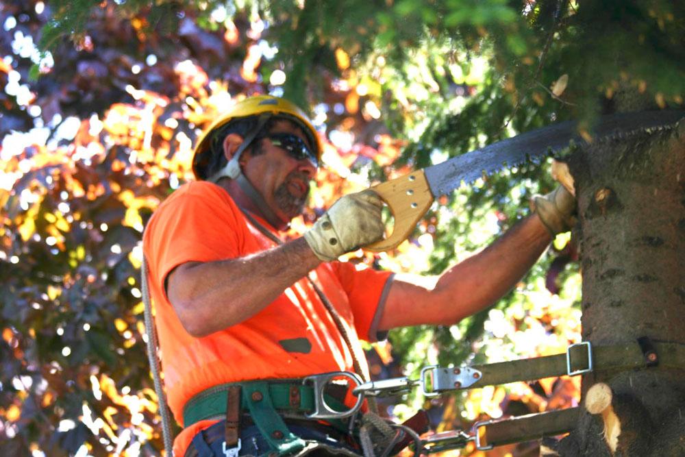 A t on le droit de couper la branche de l arbre du voisin - Article 673 code civil ...